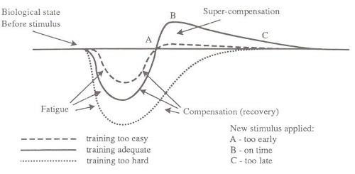supercompensation-curve